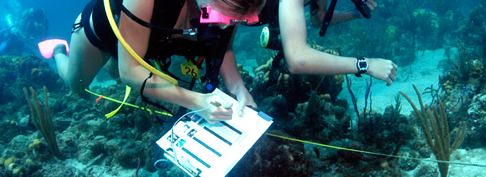 "marine biologist research paper Top 20 frequently asked questions of marine to fund their research and papers that tell others in the ""so you want to be a marine biologist-deep."